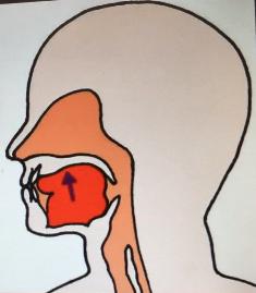 口呼吸,鼻呼吸 舌を上顎につけておく